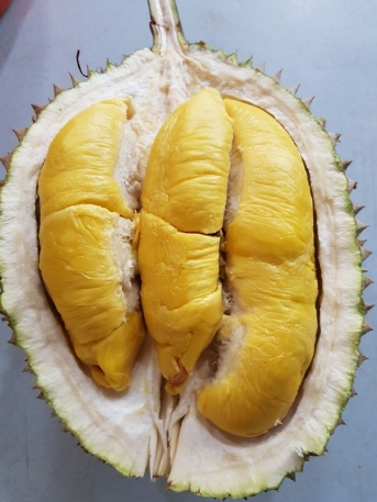 durian - the edible part